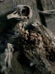 Halloween w komendzie przy Kujota [fot. Marcin Ostajewski]